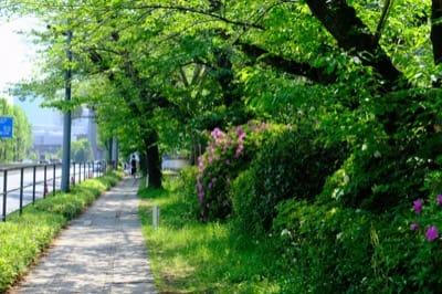 英国大使館前の内堀通り沿いの歩道を千鳥ヶ淵方面へ