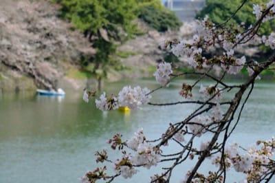 千鳥ヶ淵と桜